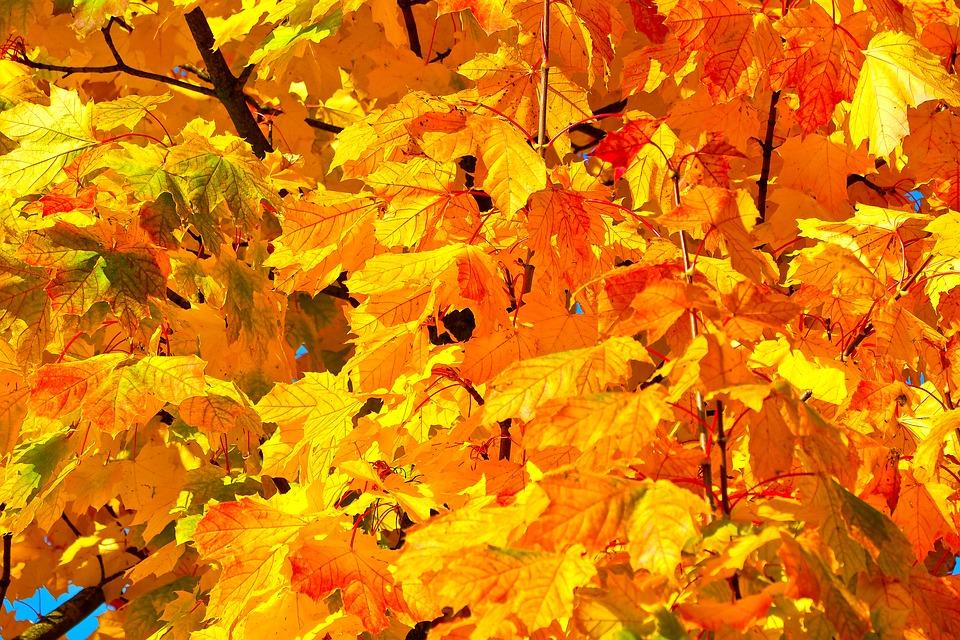 Jardin: des feuillages flamboyants pour l'automne