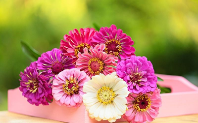 Quiz : 14 fleurs à retrouver!