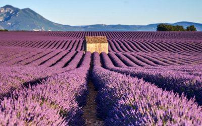 Été en France: 6 nouveaux guides à lire pour organiser vos vacances